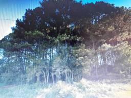 Doa-se árvores Pinus,vários tamanhos,Gravataí,Mato Alto,área 6.000 m2,limpeza,rancar tocos