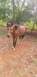 Vendo égua manga larga paulista