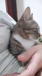 Doação de gata castrada
