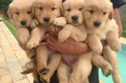 Doação de cachorrinhos!!?
