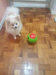Alimentador eletrônico e brinquedo para cães Foobler