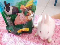 Lindos coelhos