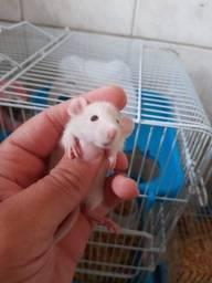 Vendo hamster twister