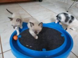 Filhotes para adoção em Ribeirao