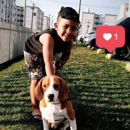 Beagle procura companheira