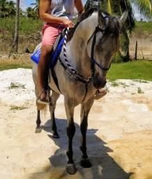 Cavalo Arreado