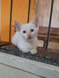 Doação gatinho macho