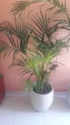 Vendo plantas na Vila Eulália rua 39