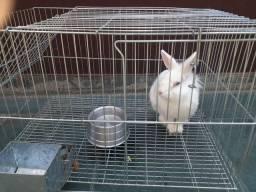 Vende se lindo  mini coelho