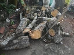 Vendo toras de madeira recem cortadas