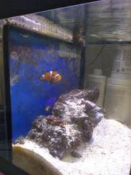 Aquário marinho vidro curvo