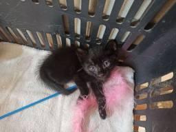 Doação gato macho