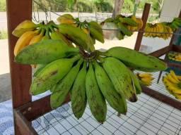 Banana Caturra, Banana Figo e Banana Prata
