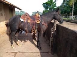 Vende-se cavalo de laço pé