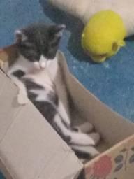 Doando gatinha