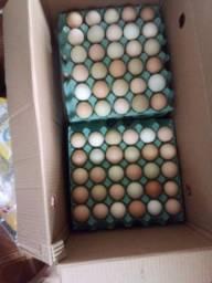 Vendo ovos caipiras e galinhas caipira