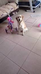 Doação pet , Cachorro