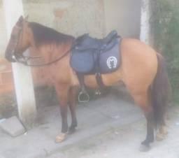 Cavalo de marcha picada