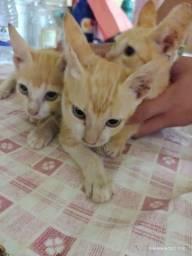 Doação de gatos machos