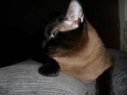 Doaçao lindo gato
