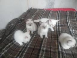 Doa-se filhotes de gato