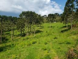 Título do anúncio: 17 Hectares na rota de Urupema/Rio Rufino