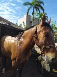 Vendo ou troco cavalo gatiado por moto pode ser pzeira
