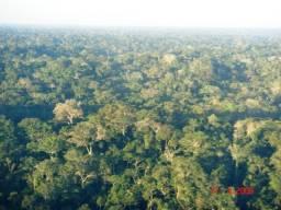14.500 Hectares de Mata, Ipê, garapeira, angelim, Aceito Permuta Brasil-AM