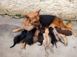 Doa-se filhotes de cachorro