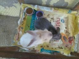 Casal de coelhos com viveiro
