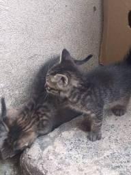 Doação de filhotes - Gatinhos