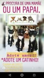 Adote uma gatinha (São Luís MA)