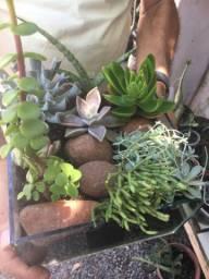 Mini jardim no vidro