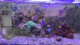 Vendo aquário marinho ( só vendo completo )