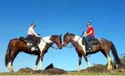 Cavalo e égua tubiano