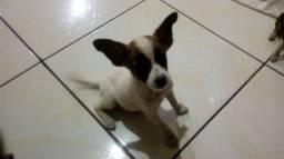 Doação de cachorrinho