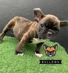 Bulldog frances tigrado promocao