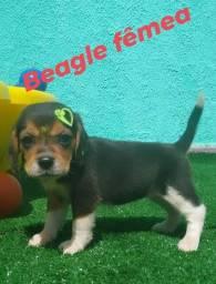 Lindas bebês de beagle