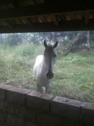 Vendo uma égua e um cavalo