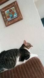 Doando um gato
