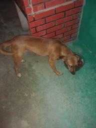 Estou doando uma cachorra fêmea ela tem 1 ano