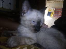gatinhos pra doação