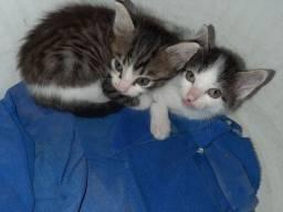 Doação de gatos machos e lindos