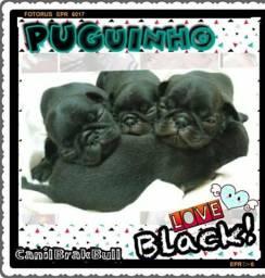 PUGs Black Fêmeas