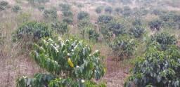 Sitio 39mil água energia Arace domingos martins 2.500m2 parcelo troco carro área escritura