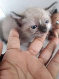 Adoção de  gatinhas