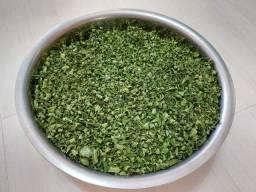 20 kgs - Folhas Desidratadas de Moringa oleifera (produção orgânica).