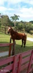 Cavalo manso para criança