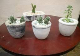 Vasos de cimento com cactus natural (Ipatinga MG)