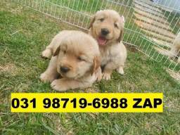 Canil Filhotes Cães Lindos BH Golden Akita Rottweiler Labrador Dálmata Sharpei